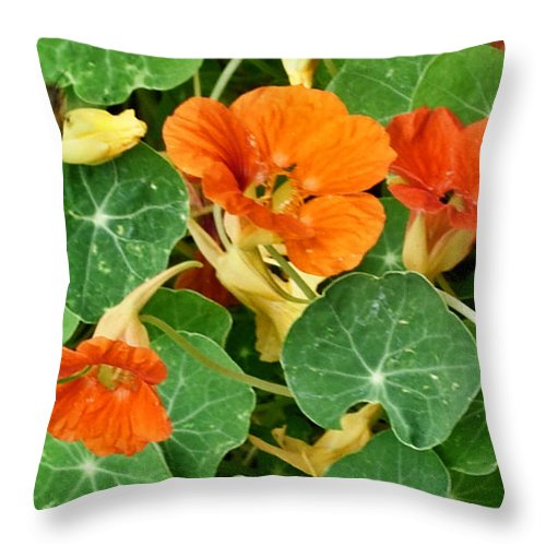 Flowers Throw Pillow featuring the photograph To Capture The Bee by Stephanie H Johnson