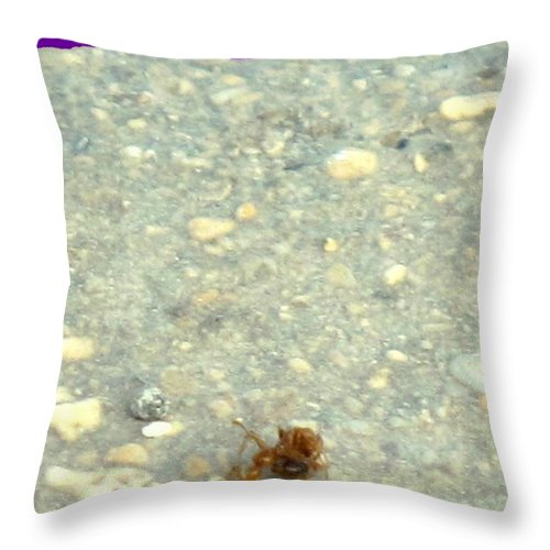 Ant Throw Pillow featuring the photograph To The Edge by Ian MacDonald