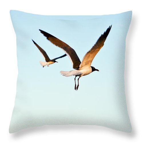 Two Throw Pillow featuring the photograph Together by Marilyn Hunt