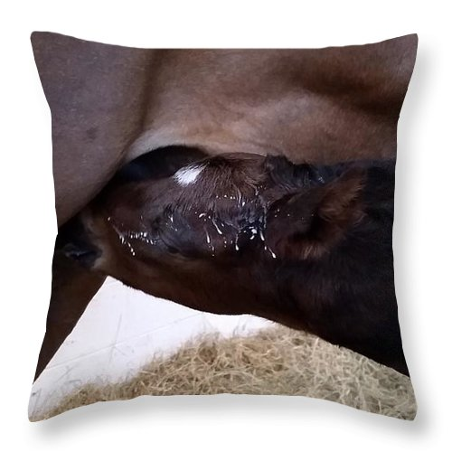 Horse Throw Pillow featuring the photograph Too Much on tap by Kristen Wesch