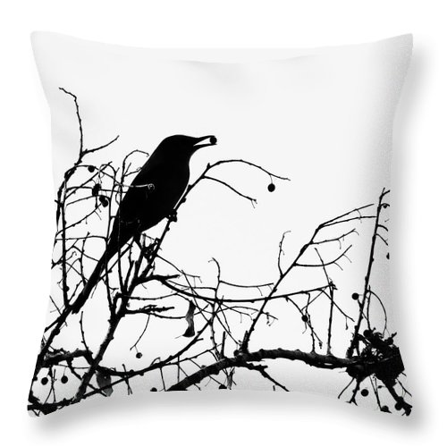 Nature Throw Pillow featuring the photograph Top Bird by Peg Urban