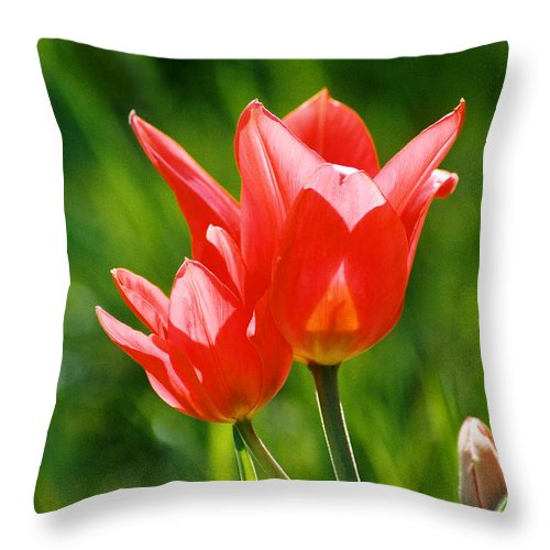 Flowers Throw Pillow featuring the photograph Toronto Tulip by Steve Karol