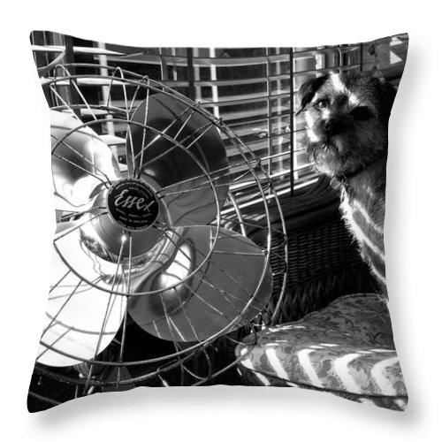 Electric Fan Throw Pillow featuring the photograph Toto Checks In by Charles Stuart