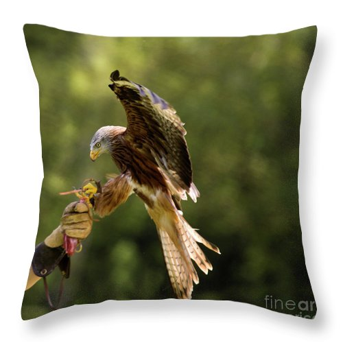 Red Kite Throw Pillow featuring the photograph Touch Down by Angel Ciesniarska