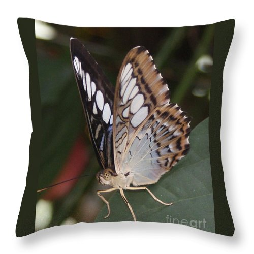 Butterfly Throw Pillow featuring the photograph Touch of Blue close up by Shelley Jones