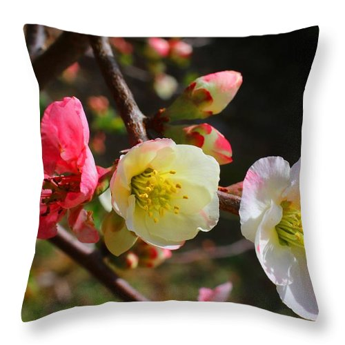 Quince Throw Pillow featuring the photograph Toyo-nishiki by Kathryn Meyer
