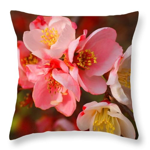 Quince Throw Pillow featuring the photograph Toyo-nishiki Quince Blooms by Kathryn Meyer