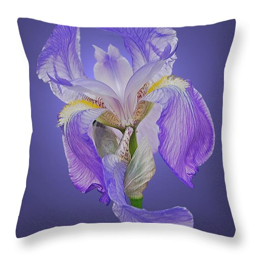 Iris Throw Pillow featuring the photograph Translucent Iris by Michael Peychich
