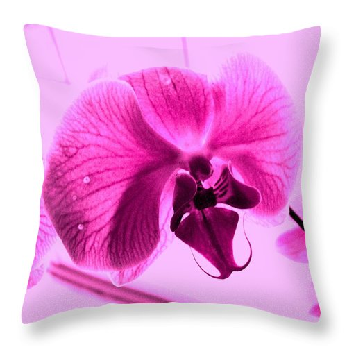Purple Throw Pillow featuring the photograph Translucent Purple Petals by Michael Grubb