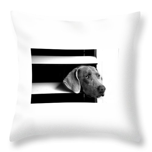 Dog Throw Pillow featuring the photograph Trapped by Guillermo Cummmings