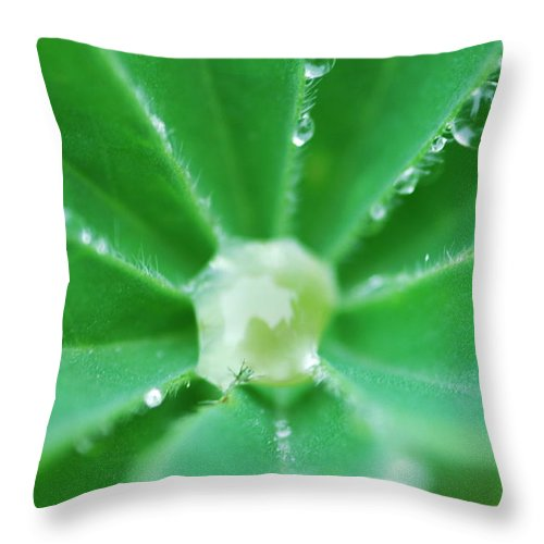 Botanical Throw Pillow featuring the photograph Trapped In A Bubble by Donna Blackhall