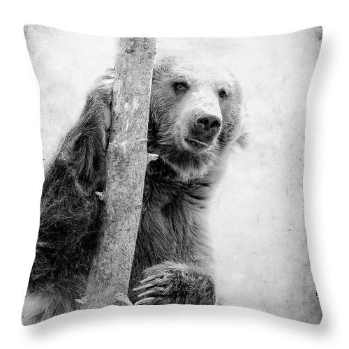 Grizzly Throw Pillow featuring the photograph Tree Bear by Athena Mckinzie