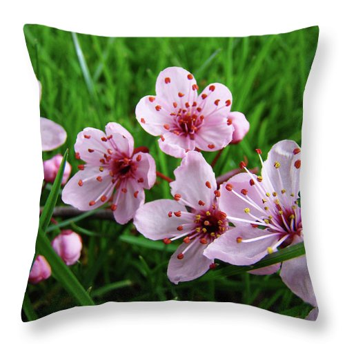 �blossoms Artwork� Throw Pillow featuring the photograph Tree Blossoms 4 Spring Flowers Art Prints Giclee Flower Blossoms by Baslee Troutman