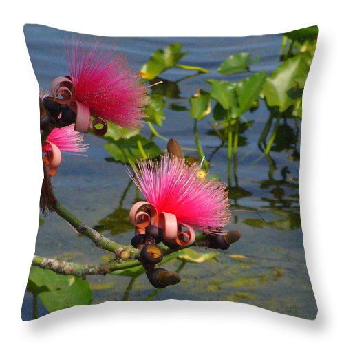 Pink Throw Pillow featuring the photograph Tree Blossoms by Peggy King