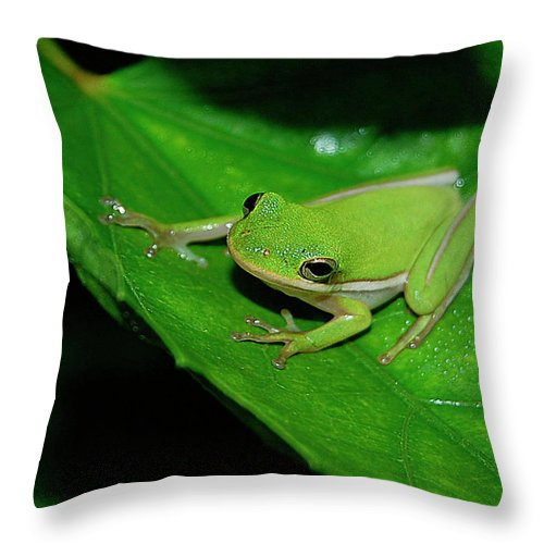 Frog Throw Pillow featuring the digital art Tree Frog On Hibiscus Leaf by DigiArt Diaries by Vicky B Fuller