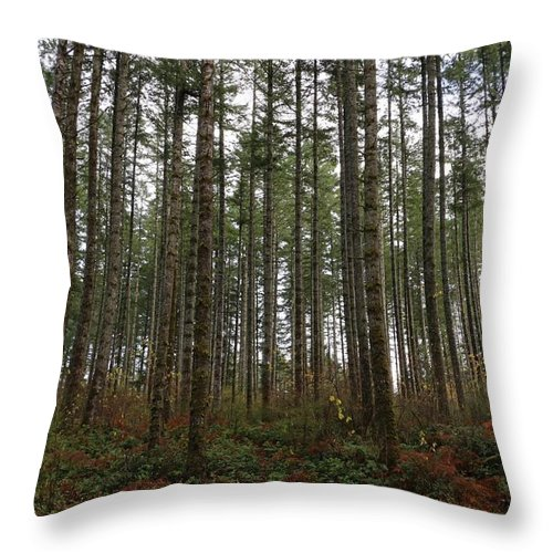 Trees Throw Pillow featuring the photograph Tree Hugger's Paradise by Dani Keating