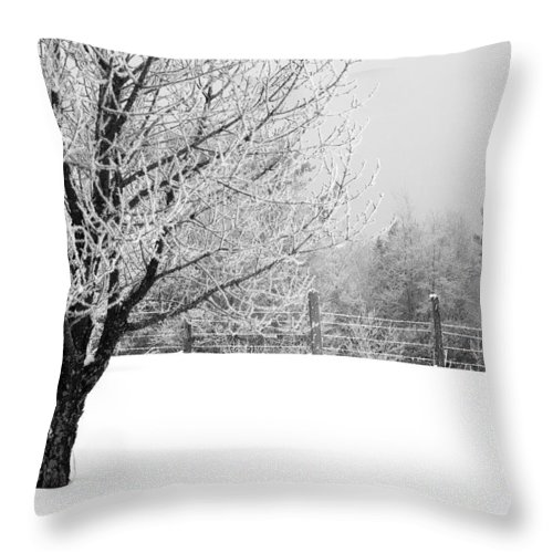 Frost Throw Pillow featuring the photograph Tree by Jessica Wakefield