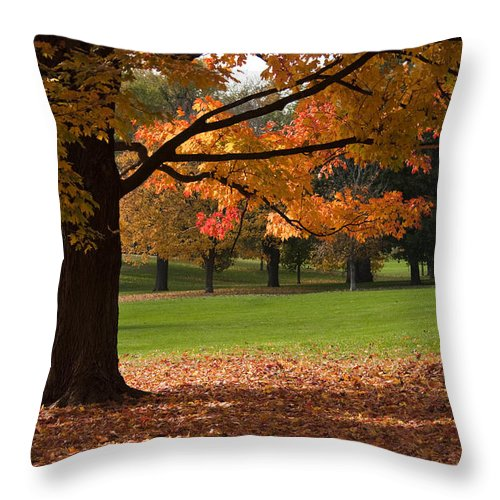 Maple Leaf Throw Pillow featuring the photograph Tree Of Fall Autumn Colors by Chad Davis