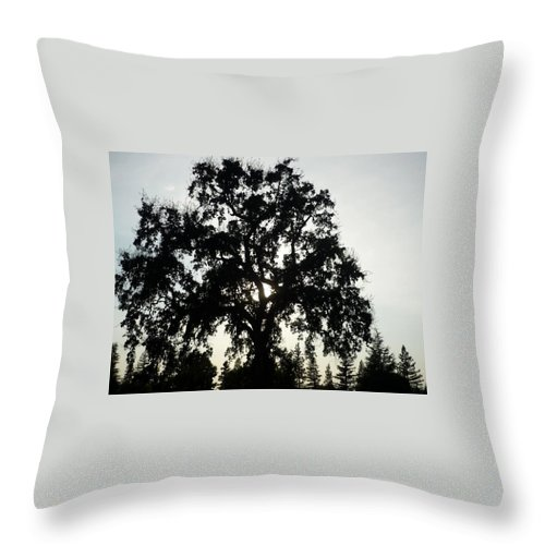 Silhouette Throw Pillow featuring the photograph Tree Silhouette by Bethany Morrow