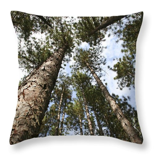 Autumn Throw Pillow featuring the photograph Tree Stand by Margie Wildblood