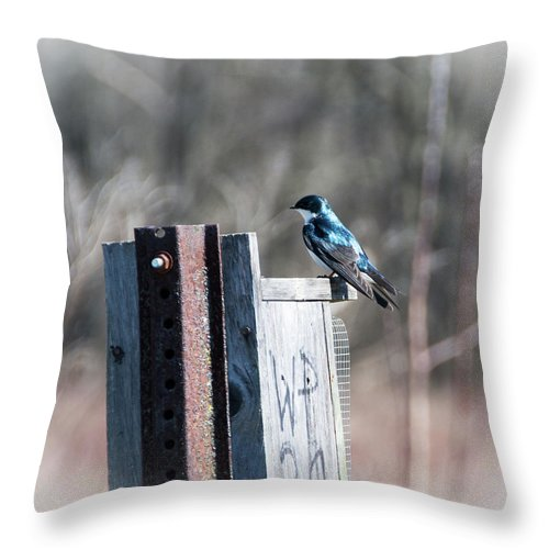 Bird Throw Pillow featuring the photograph Tree Swallow by Jennifer Wick