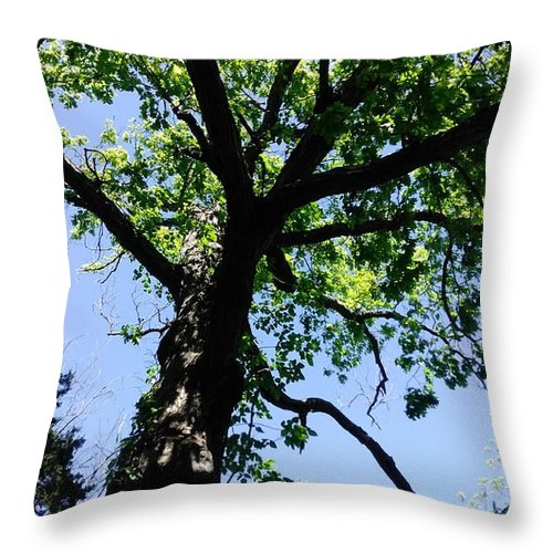 Tree Throw Pillow featuring the photograph Tree Top by Alisha Albin
