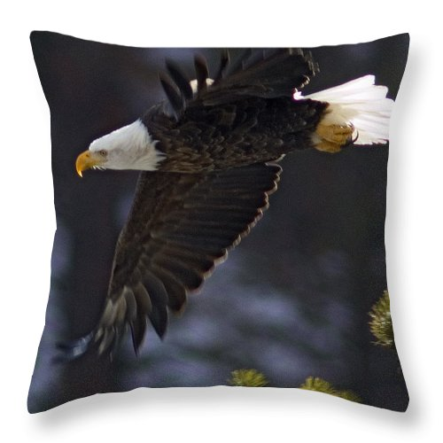 Haliaeetus Leucocephalus Throw Pillow featuring the photograph Tree Top Flight-signed by J L Woody Wooden