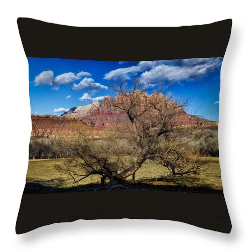 National Park Throw Pillow featuring the photograph Tree With A View by Mitch Johanson