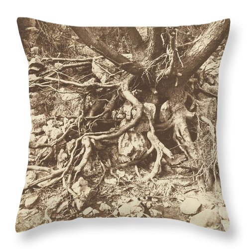 Throw Pillow featuring the photograph Tree With Tangle Of Roots by Hugh Owen