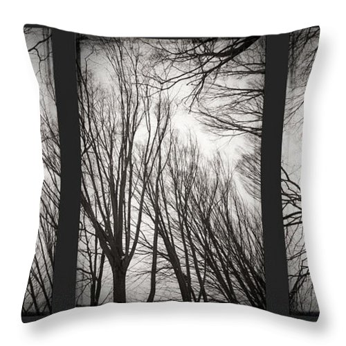 Black&white Throw Pillow featuring the photograph Treeology by Dorit Fuhg