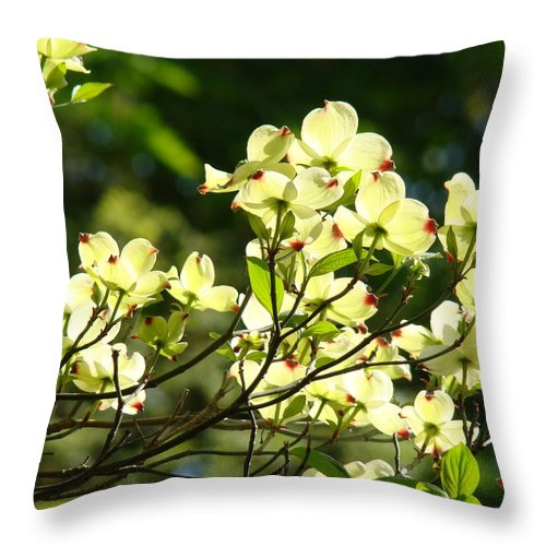 Dogwood Throw Pillow featuring the photograph Trees Landscape Art Sunlit White Dogwood Flowers Baslee Troutman by Baslee Troutman