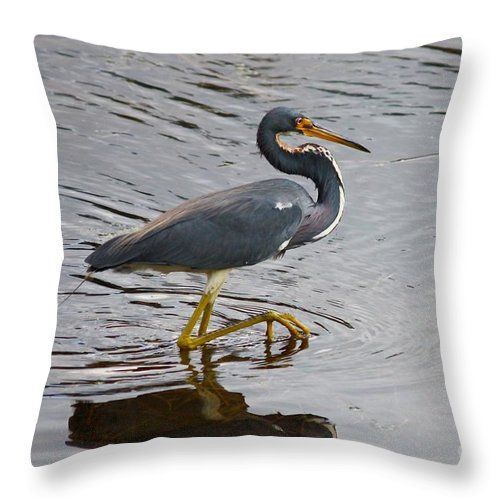 Bird Throw Pillow featuring the photograph Tri-colored Heron Wading In The Marsh by Carol Groenen