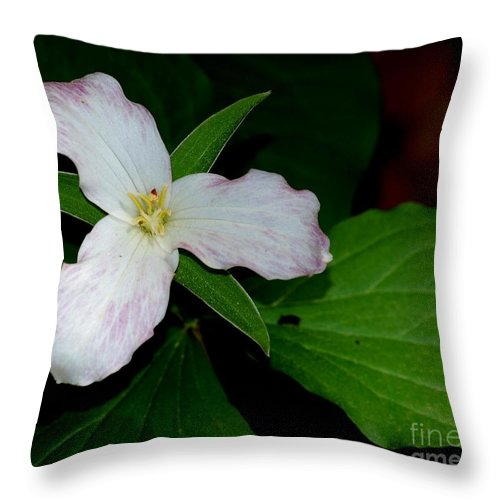 Landscape Throw Pillow featuring the photograph Trillium by David Lane
