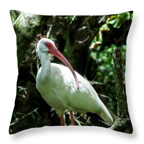 American White Ibis Throw Pillow featuring the photograph Trimmed In Pink by Norman Johnson