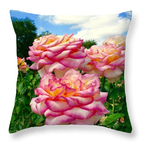 Rose Garden Throw Pillow featuring the photograph Trio Of Rose by Bennett Thompson