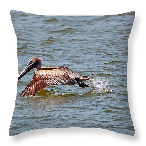 Bird Throw Pillow featuring the photograph Trolling For Fish by Donna Proctor