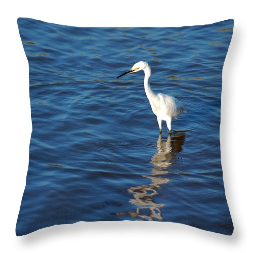 Egret Throw Pillow featuring the photograph Trolling For Food by Suzanne Gaff