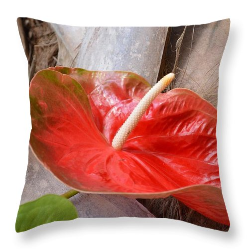 Floralart Throw Pillow featuring the photograph Tropical Beauty by Sonali Gangane