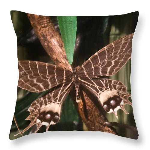 Butterfly Throw Pillow featuring the photograph Tropical Butterfly by Douglas Barnett