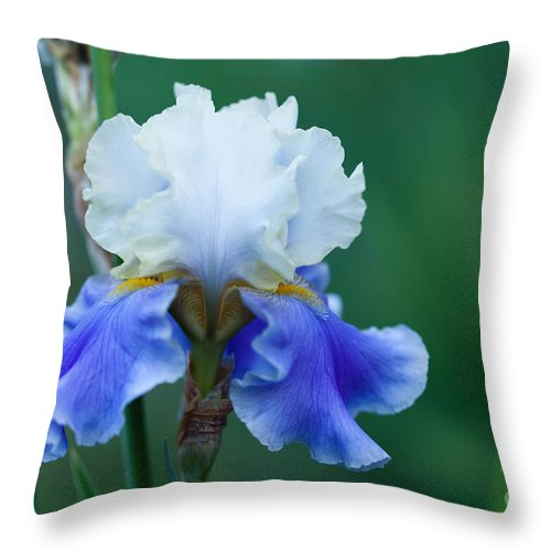 Iris Throw Pillow featuring the photograph Tropical Dreams by Beve Brown-Clark Photography