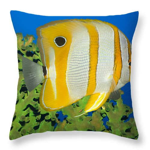 Butterflyfish Throw Pillow featuring the photograph Tropical Fish Butterflyfish. by MotHaiBaPhoto Prints