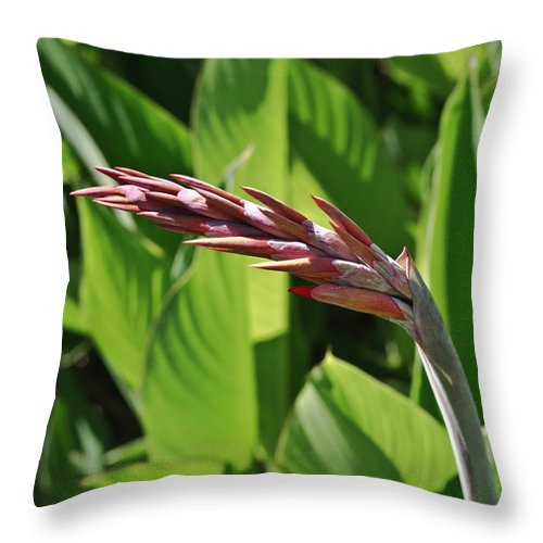 Tropical Throw Pillow featuring the photograph Tropical Flower Buds by Douglas Barnett
