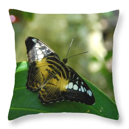 Butterfly Throw Pillow featuring the photograph Tropical Garden Beauty by David Lee Thompson
