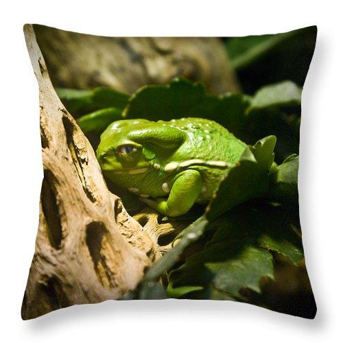 Amphibian Throw Pillow featuring the photograph Tropical Green Frog by Douglas Barnett