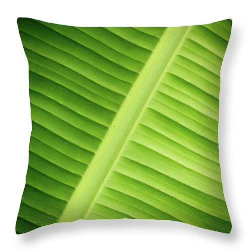 Leaf Throw Pillow featuring the photograph Tropical Leaf by Wim Lanclus