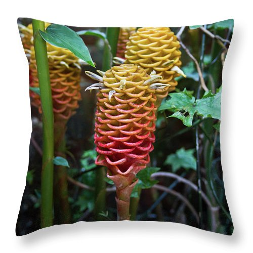 Tropical Throw Pillow featuring the photograph Tropical Mystery Plant by Douglas Barnett