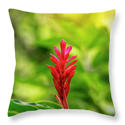 Red Ginger Throw Pillow featuring the photograph Tropical Palnt Red Ginger by Tim Hester