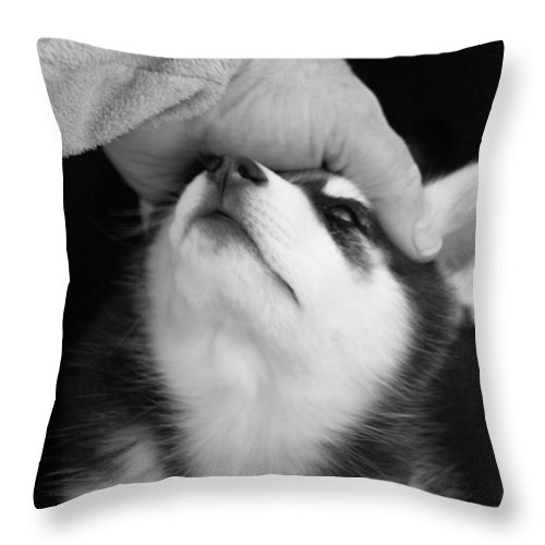 Siberian Husky Throw Pillow featuring the photograph True Love by Kathy Clark