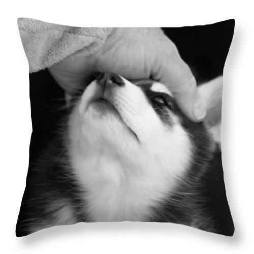 Siberian Husky Throw Pillow featuring the photograph True Love by Kathy Clark