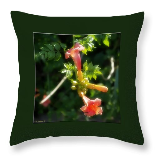 2d Throw Pillow featuring the photograph Trumpet Flower by Brian Wallace
